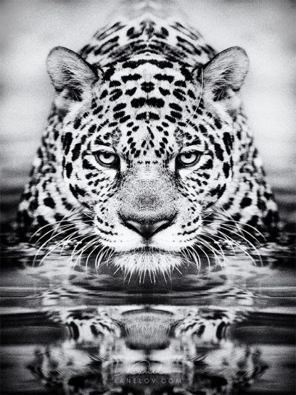 leopard photography print