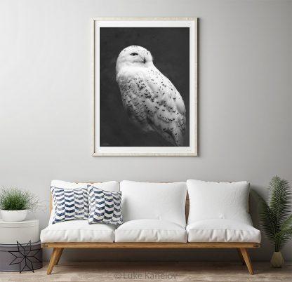Snowy owl photography print