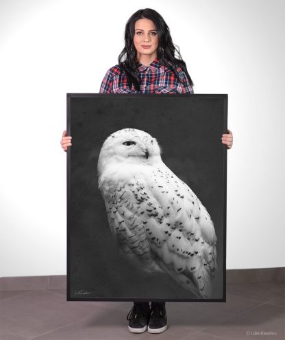 Snowy owl framed canvas