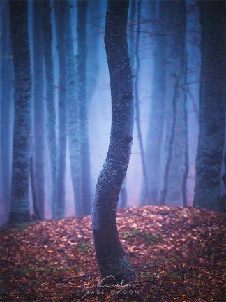 Misty forest, tree print