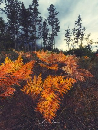 Yellow orange fern in the forest