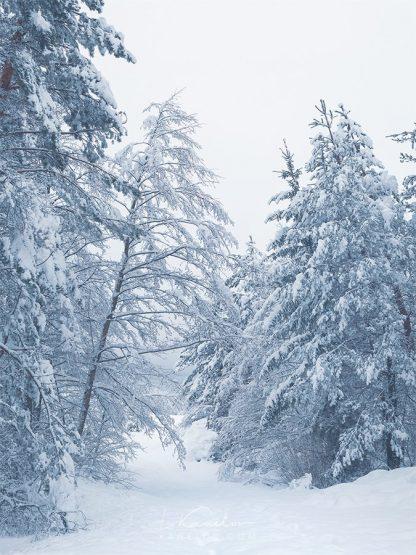 Misty winter landscape