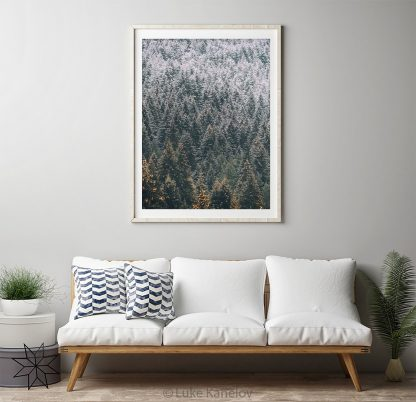 Moody forest, snowy trees