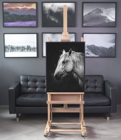 Black and white horse canvas