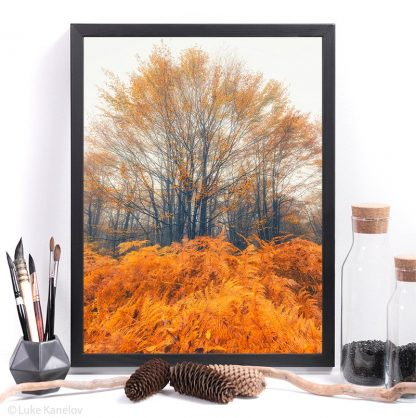Fall colors landscape