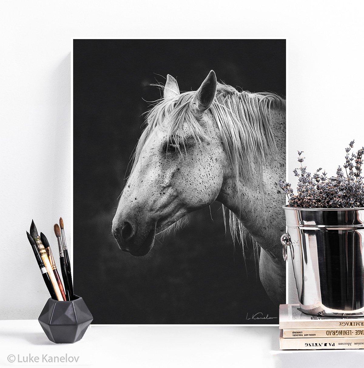 White Horse Framed Canvas Print Luke Kanelov