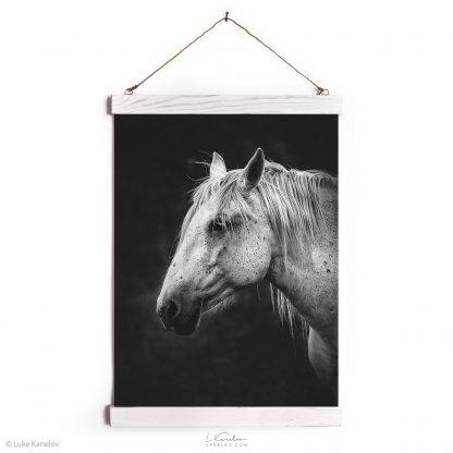 White horse fine art print