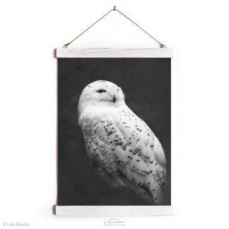Snowy owl canvas