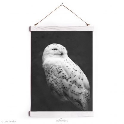 Snowy owl canvas