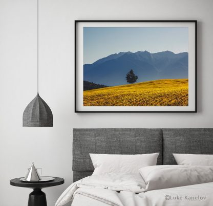 Lonely tree on a field with a mountain background