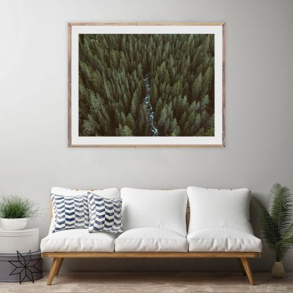 Pine trees forest landscape