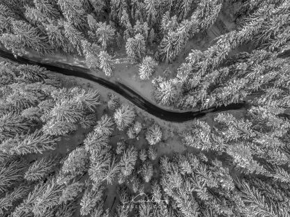 Aerial view of winter forest covered in snow