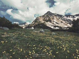 Flowery mountain meadow