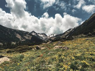 Flowery mountain meadow landscape