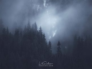 Misty forest landscape photography