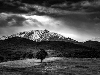 Tree black and white print