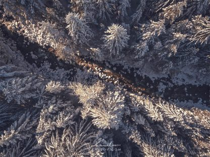 Snowy pines landscape drone photo
