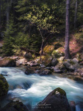 Spring mountain stream