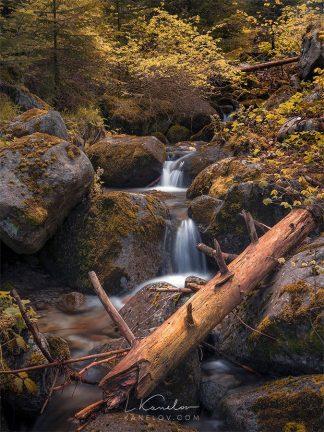 Forest stream print