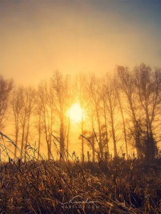 Yellow sunrise landscape