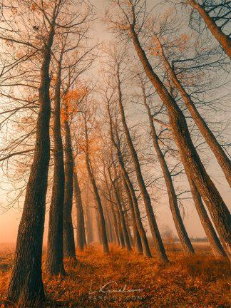 Orange autumn trees print