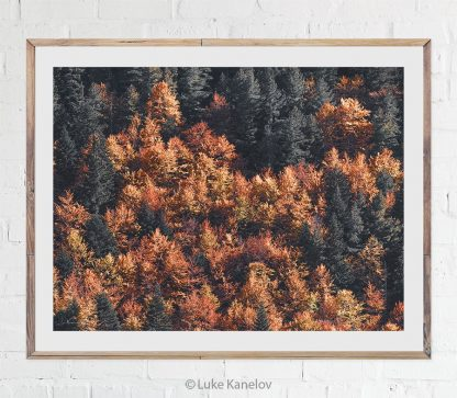 Golden autumn landscape